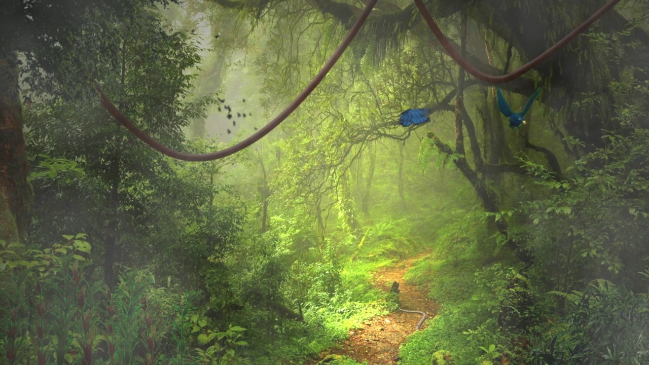 Rainforest animation - YouTube - photo#16