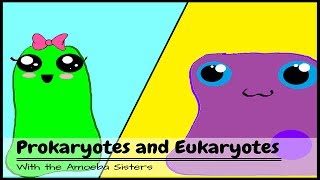 (OLD VIDEO) Prokaryotes and Eukaryotes