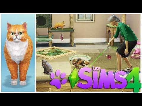 Eleveuse de chat persan - La vieille dame aux chats ! Sims 4 Chiens et Chats (1)