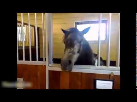 Топ 10 Забавные Лошади Видео Подборка 2016 - [NEW HD]