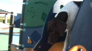 Don Sullivan The Dogfather Cool Dog Tricks & Fun Things Judah The Tv Dog German Shorthair Pointer