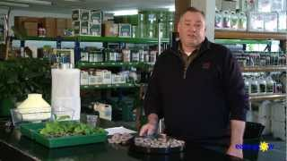 EASY GROW - Indoor Tobacco Growing Demonstration