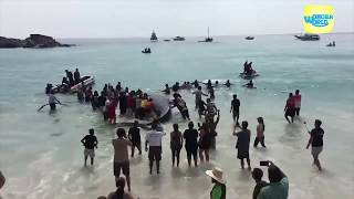 Incredible Beachgoers Rescue Beached Whale , and puppies rescue