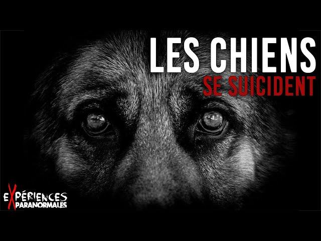 Expériences Paranormales – Les chiens se suicident !