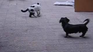 貓貓狗狗影片cat attack dog