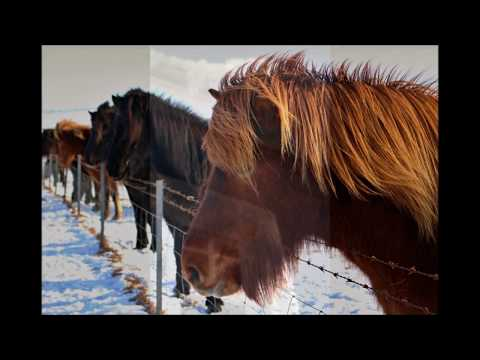 Travel with Love - ICELAND