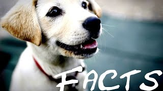 10 Interesting Facts About Dogs