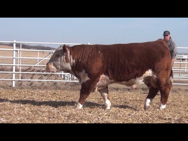 Express Ranches Lot 222