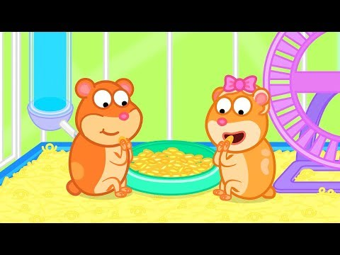 Lion Family Hamster was Released Cartoon for Kids