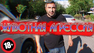 СтопХам-NEED FOR SPEED IN RUSSIA🏁