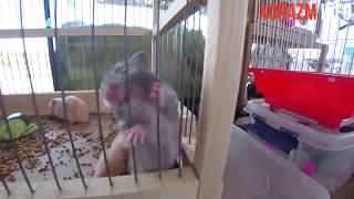 Totiqush - Hamster - Aqvarium Baliqlari !
