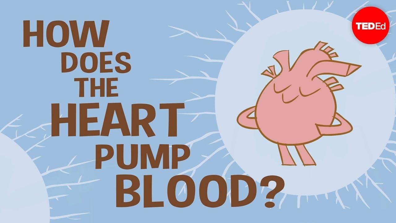 How the heart actually pumps blood - Edmond Hui - YouTube [ 720 x 1280 Pixel ]
