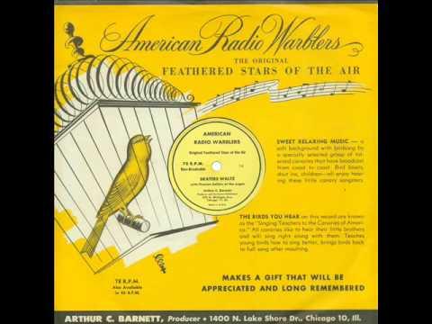 Skaters Waltz - American Radio Warblers