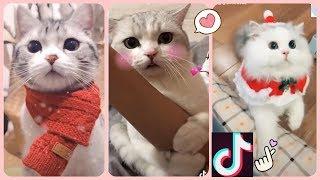 Tiktok chó mèo cute hài hước vui nhộn