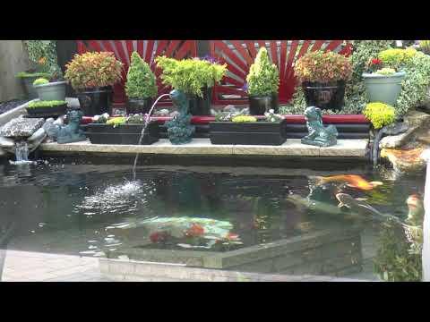 Koi Pond And Garden