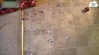Коты и Ёлки///не смейся