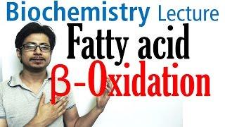 Beta oxidation of fatty acids | Fatty acid metabolism lecture 1