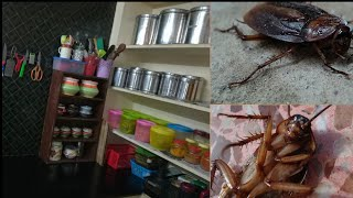 Effective ways to your kitchen to permanently get rid of cockroaches || Kitchen cleaning tips