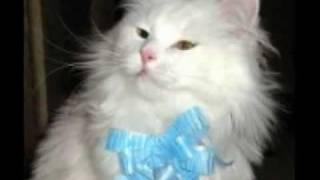 Кот (Пух) ВЕЧНАЯ ПАМЯТЬ!
