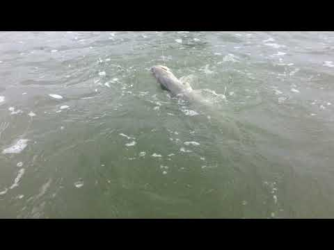 Watch Capt. Sally land a big Baffin Bay Trout!