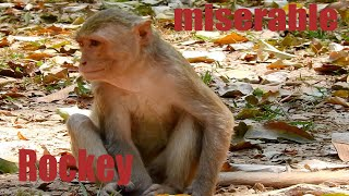 ROCKY HAS FEELING MUCH HURT ON HIS LEG AND HARD TO WALK OR RUN WELL #MONKEY#