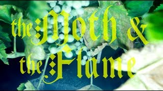 Watch Moth  The Flame Holy War video