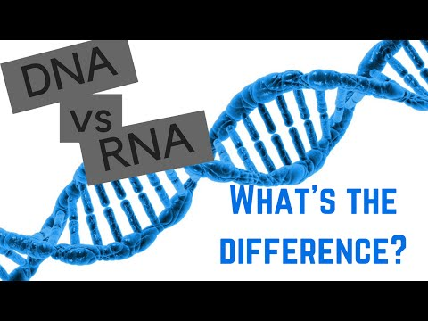 DNA vs RNA - 5 Differences Between DNA and RNA