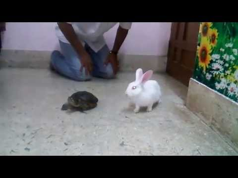 Rabbit with Tortoise  Intresting  Real Story