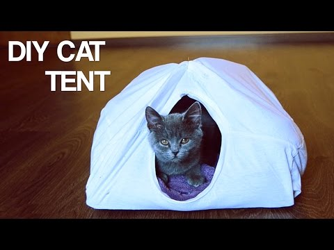 DIY Cat Tent | Life Hack