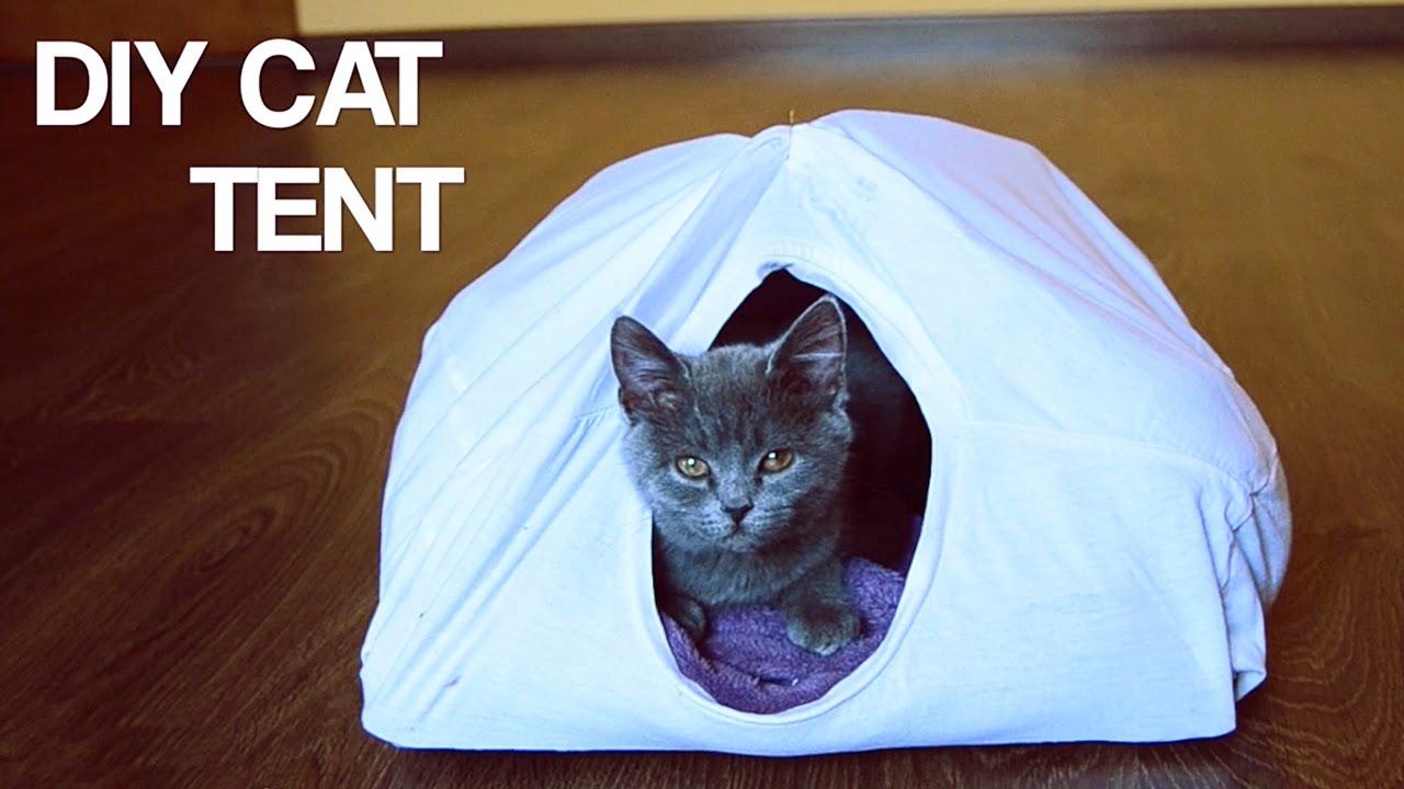 & DIY Cat Tent | Life Hack - YouTube