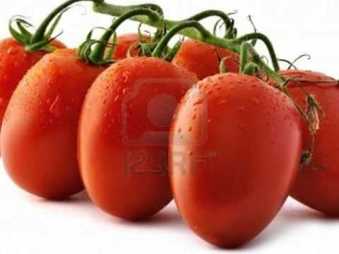 Exporting fresh Tomatoes Bunch Vegetables Morocco