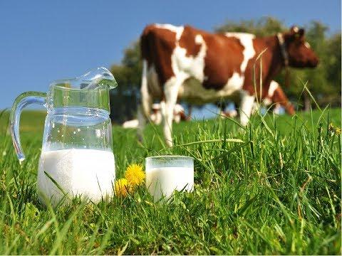 Молоко раздора. Действительно ли молочная продукция в школах и садиках некачественная?
