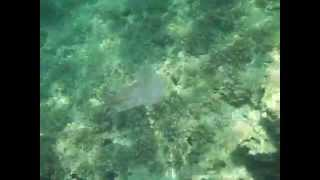 Malta Jellyfish