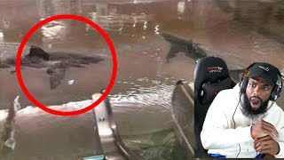 Sharks BREAK Tanks INSIDE THE MALL! Crazy Shark Moments