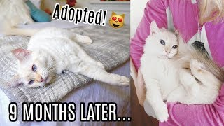 9 MONTHS AFTER CAT ADOPTION! - Louise Update!