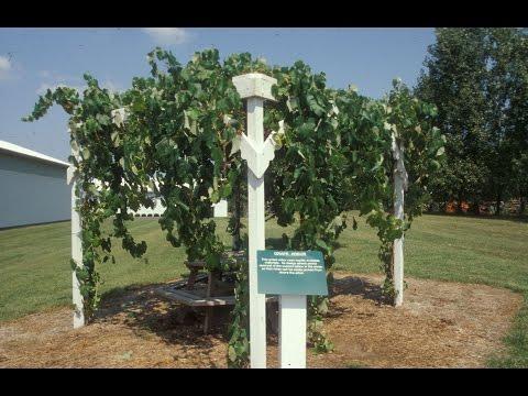 Grape Video 43   Vineyard Site Selection - Part 5 -  The Backyard Vineyard