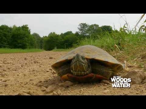 Ballard Wildlife Management Area