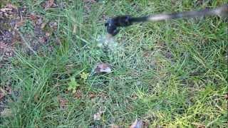 Unkraut Wildkraut aus dem Rasen entfernen - NewWonder555