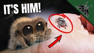 real-life-lucas-the-spider-setting-up-the-enclosure