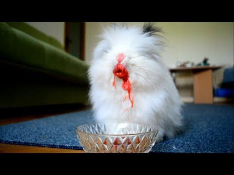 Rabbit Eating Strawberries & Cherries