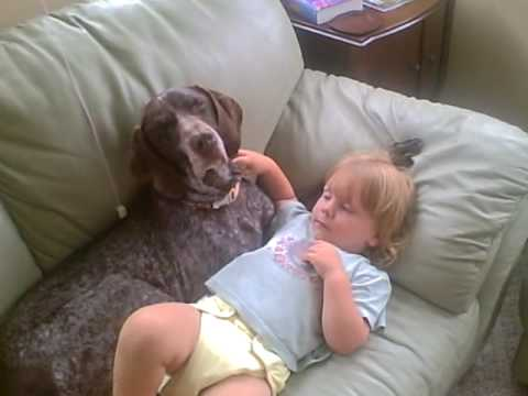 German Shorthaired Pointer Amp Baby Take A Nap Youtube