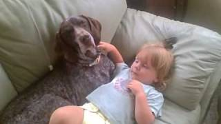 German Shorthaired Pointer &  Baby Take A Nap