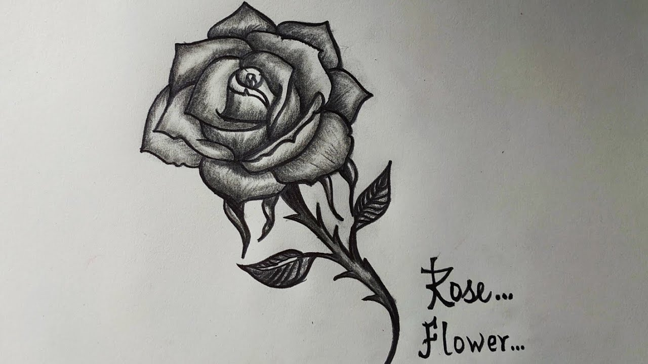 How To Draw Rose Flower With Pencil Drawing Of Rose Flower Easy Step By Step Youtube