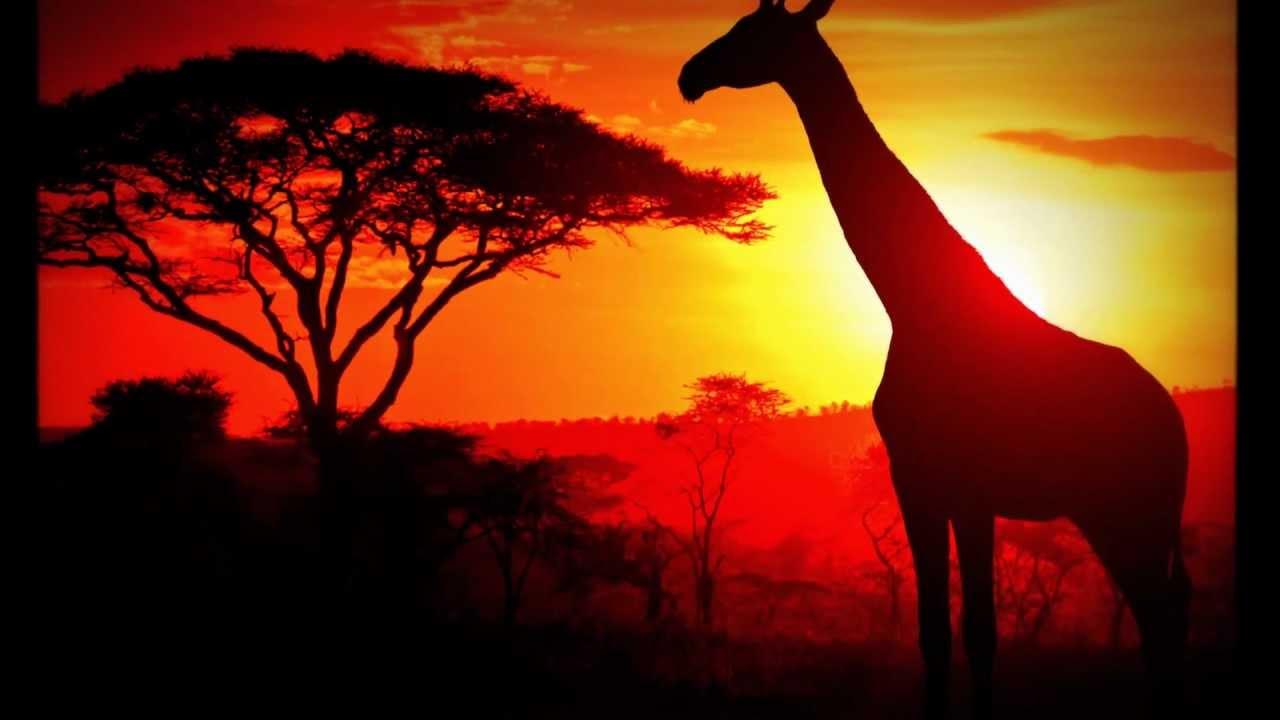 afrika landschaft und tiere