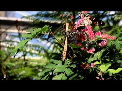 butterfly-pavilion-wedding-venue,-westminster,-co