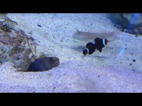 FunnY FISH!!!! Fish Can Joke
