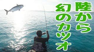 陸から幻のカツオがついに釣れたぁああ!! #3 thumbnail