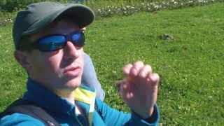 видео Ачипсинские водопады