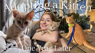 What To Know Before Adopting A Kitten in 2021   Cat Update (1 Year Old)