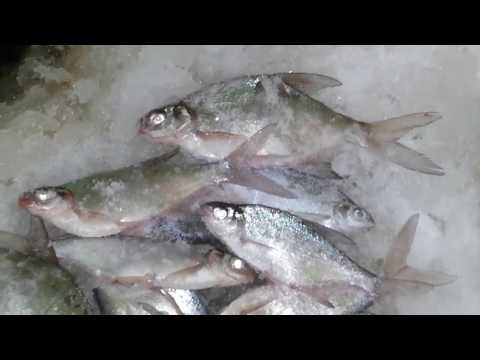 Озеро исетское зимняя рыбалка